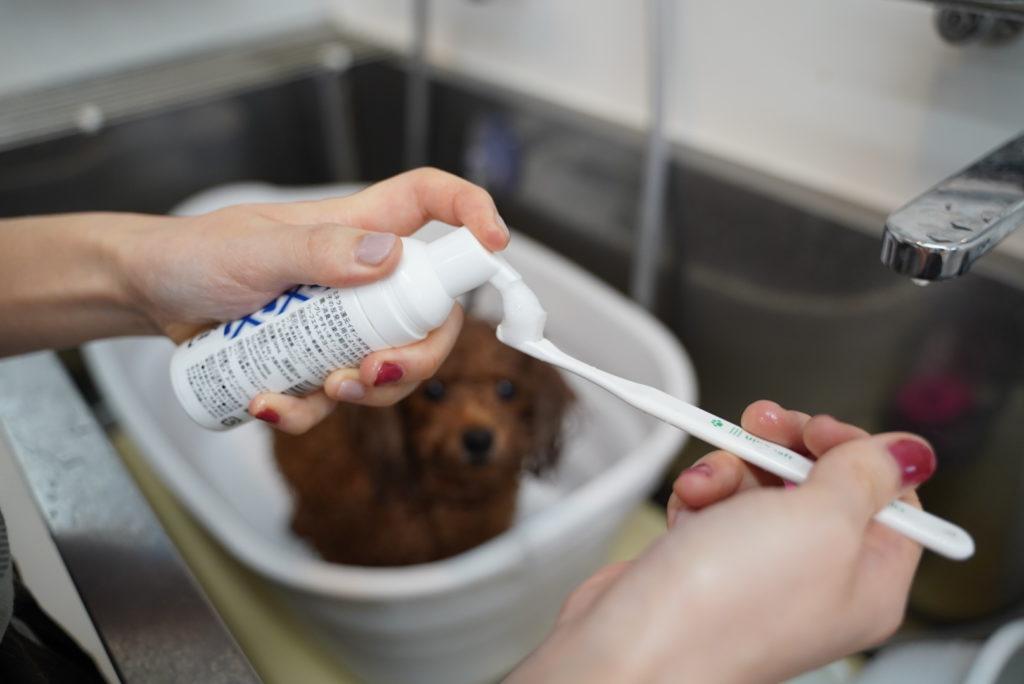 歯ブラシにホイップマウスウォッシュをつける